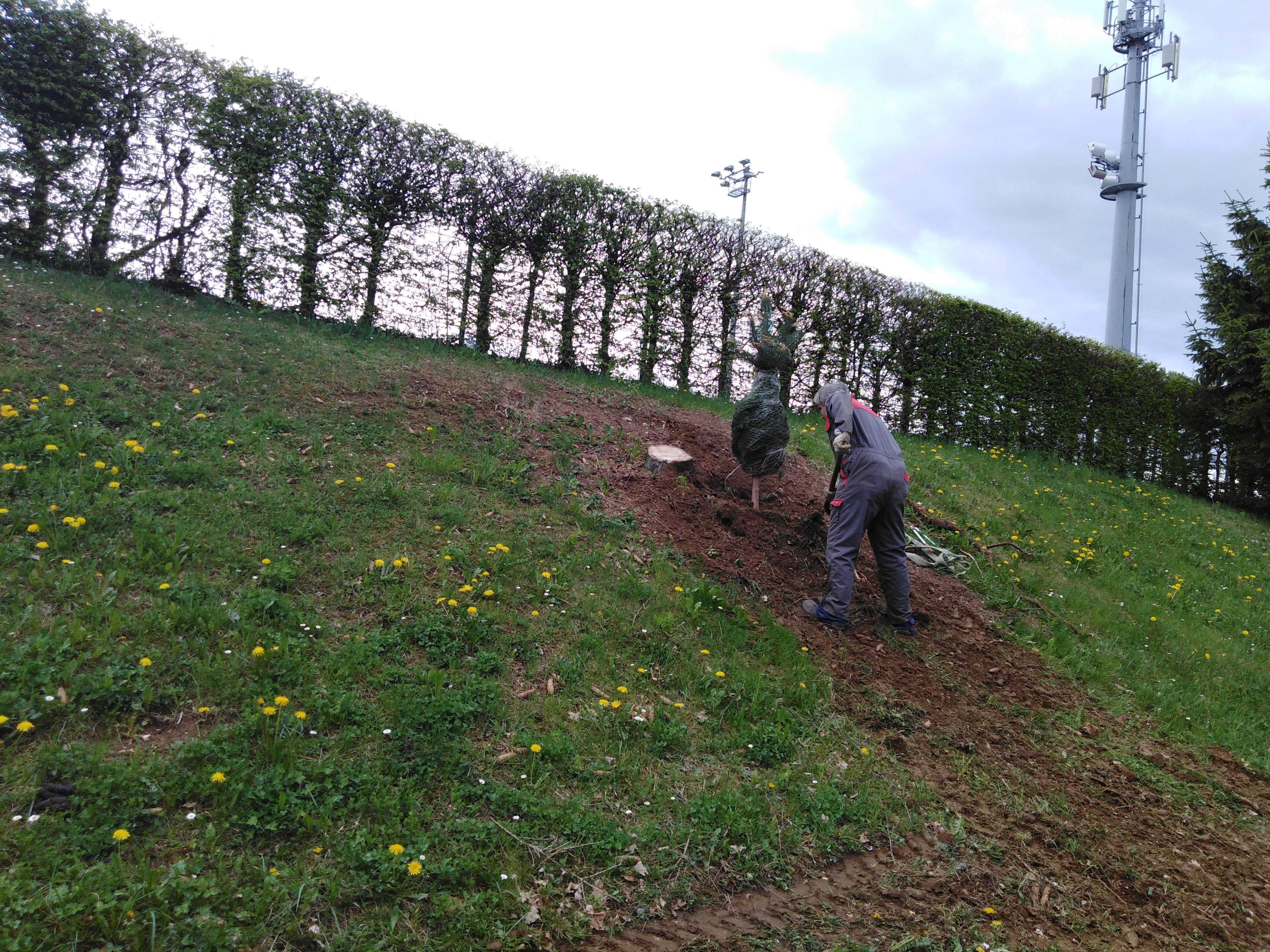 Plantation de sapins aux Ebeaux